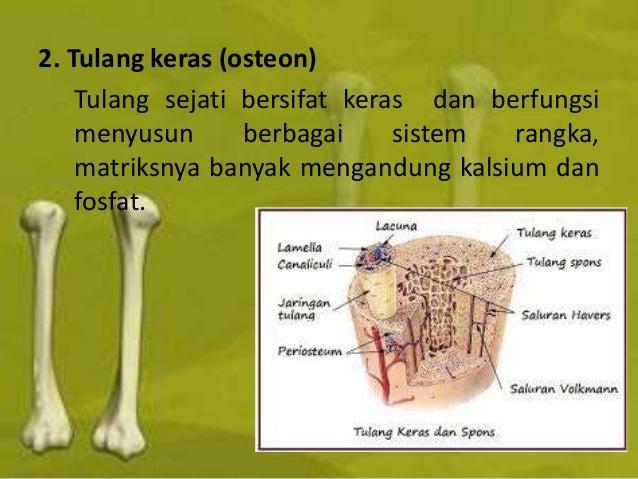 730 Koleksi Gambar Tulang Hewan Vertebrata HD Terbaik