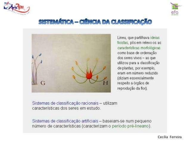 Cecília Ferreira