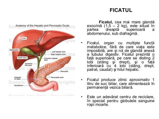 PANCREASUL • Glandă mixocrină situată în potcoava duodenală, în spatele stomacului. • Pancreasul exocrin secretă sucul pan...