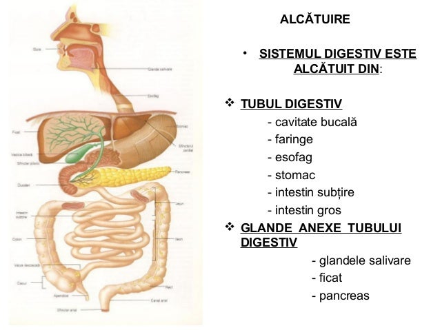 ALCĂTUIRE • SISTEMUL DIGESTIV ESTE ALCĂTUIT DIN:  TUBUL DIGESTIV - cavitate bucală - faringe - esofag - stomac - intestin...
