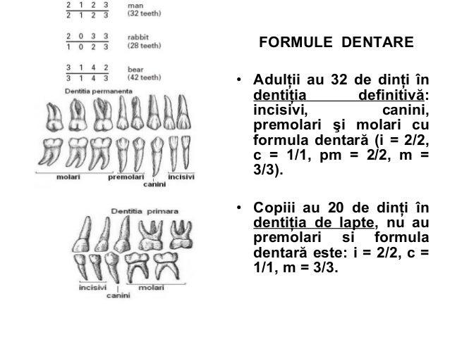 FORMULE DENTARE • Adulţii au 32 de dinţi în dentiţia definitivă: incisivi, canini, premolari şi molari cu formula dentară ...