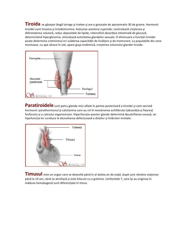 Sistemul endocrin Slide 3