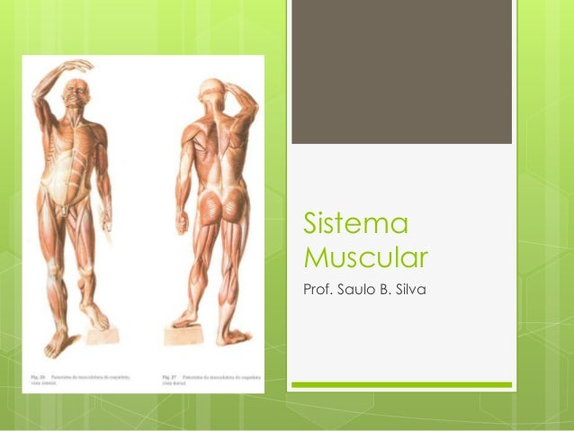 Sistema Muscular Prof. Saulo B. Silva