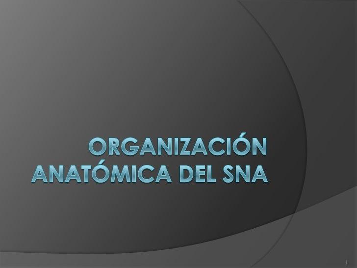 Organización anatómica del sna<br />1<br />