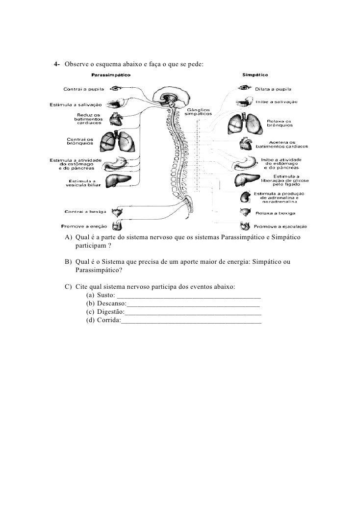 Muitas vezes Sistema nervoso- Ensino Fundamental LP06