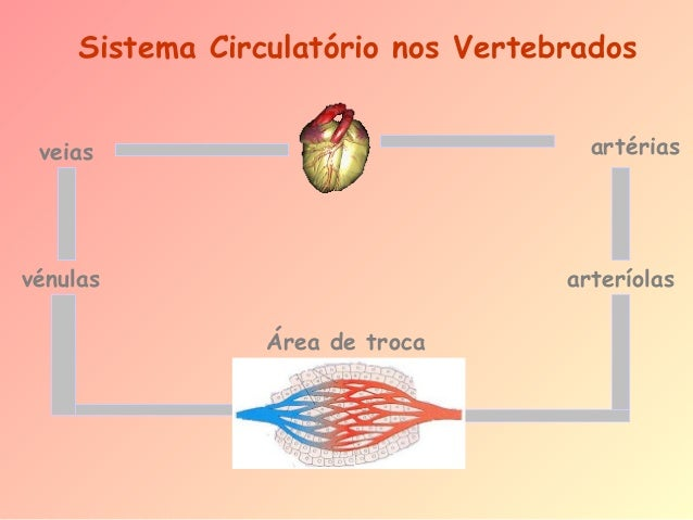 Sistema Circulatório nos Vertebrados veias  artérias  vénulas  arteríolas Área de troca