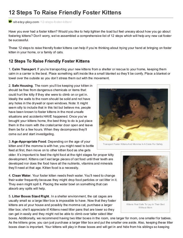 Transport Foster Kittens And Momma In A Crate For Safety Kittens Feel Safe To Lay In Their Bed Without Mom 12 Steps To Rai...