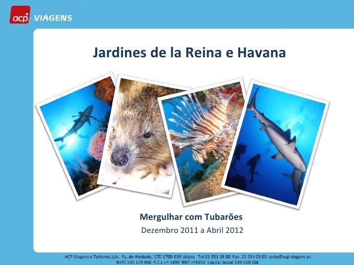 Jardines de la Reina e Havana Mergulhar com Tubarões  Dezembro 2011 a Abril 2012