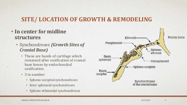 Sites Types Of Growth Orthodontics A synchondrosis is a type of cartilaginous joint where hyaline cartilage completely joins together two bones.1 synchondroses are different than symphyses which are formed of fibrocartilage. sites types of growth orthodontics