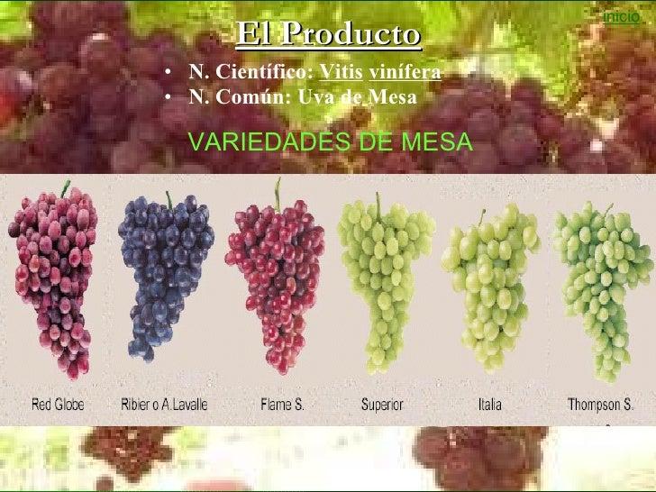 Situacion del cultivo de la vid en la region ica 2011 - Variedades de uva de mesa ...