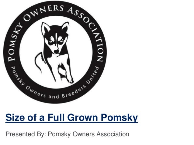 Size of a Full Grown Pomsky Presented By: Pomsky Owners Association