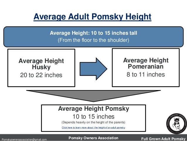 Average Adult Size