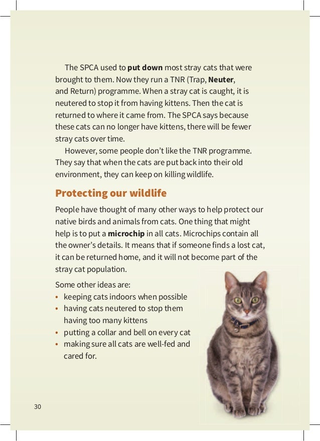 How To Make A Stray Cat My Pet
