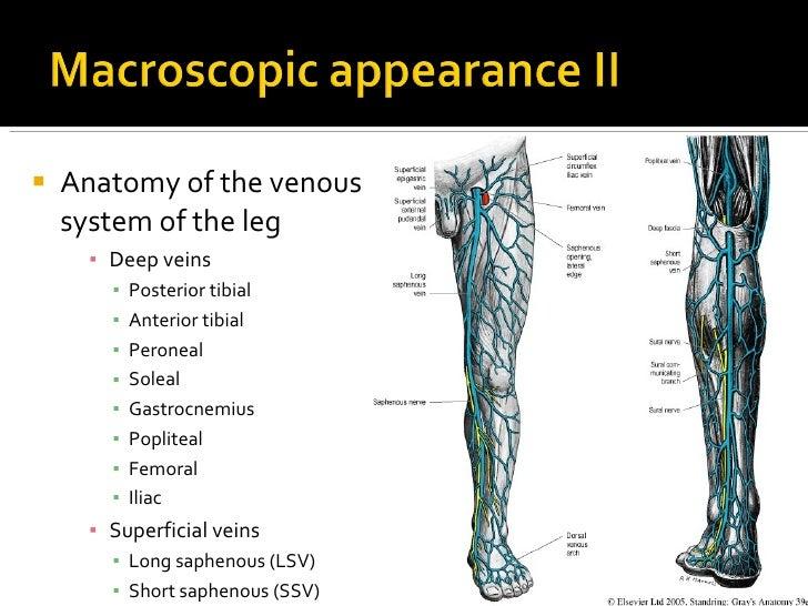 Venous Anatomy Leg Choice Image - human body anatomy