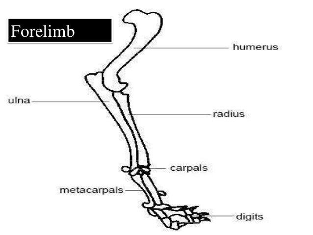 skeletal system of human body