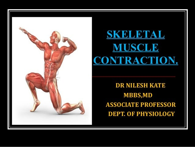 skeletal muscle contraction, Muscles