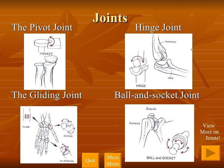 Joints <ul><li>The Pivot Joint  Hinge Joint </li></ul><ul><li>The Gliding Joint  Ball-and-socket Joint </li></ul>View More...