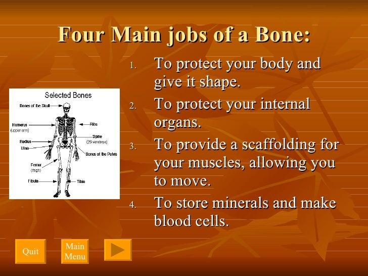 Four Main jobs of a Bone: <ul><li>To protect your body and give it shape. </li></ul><ul><li>To protect your internal organ...