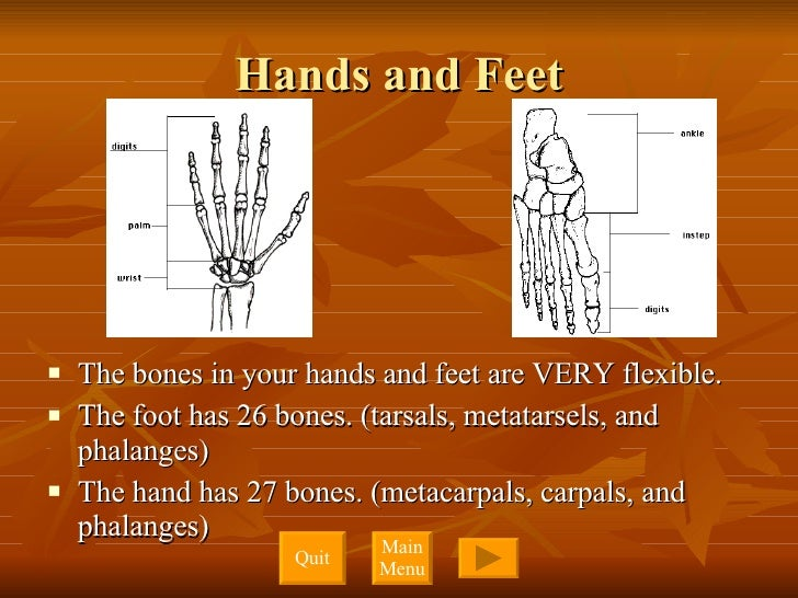 Hands and Feet <ul><li>The bones in your hands and feet are VERY flexible.  </li></ul><ul><li>The foot has 26 bones. (tars...