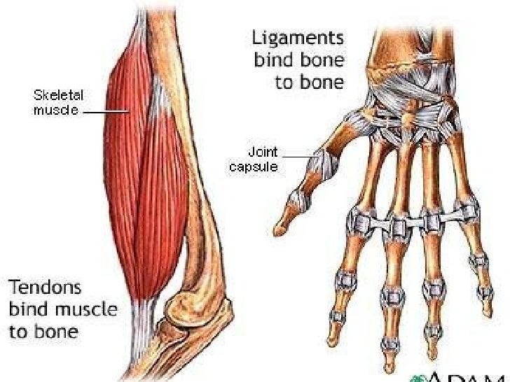 Skeletal System_ST.ppt slideshare - 웹