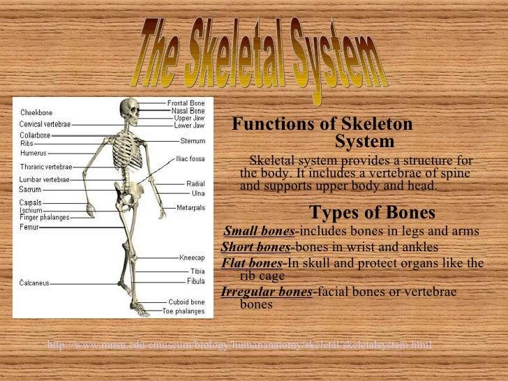 <ul><li>Functions of Skeleton  System </li></ul><ul><li>Skeletal system provides a structure for the body. It includes a v...