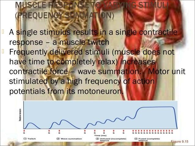 skeletal muscle mechanics, Muscles