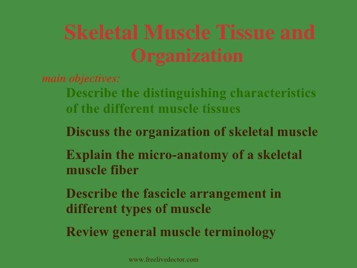 <ul><li>Describe the distinguishing characteristics of the different muscle tissues </li></ul><ul><li>Discuss the organiza...