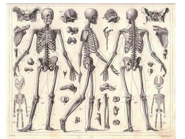 Homework help skeletal system