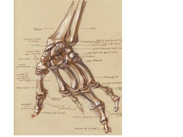 Skeletal structure