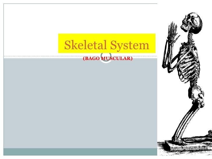 (BAGO MUSCULAR) Skeletal System