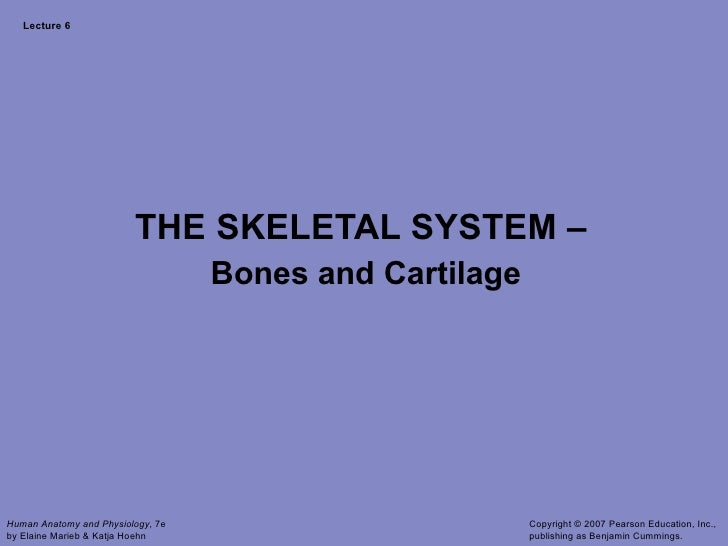 Lecture 6 THE SKELETAL SYSTEM –  Bones and Cartilage