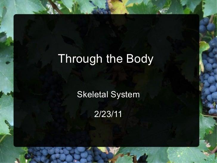 Through the Body   Skeletal System 2/23/11