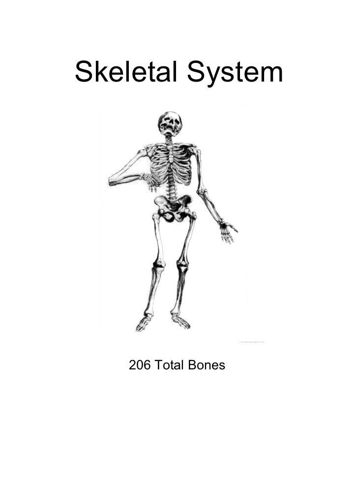 Skeletal System 206 Total Bones