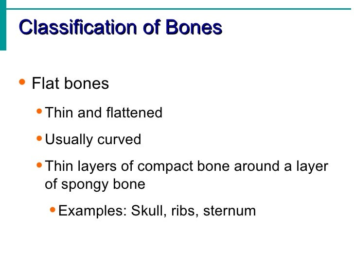 Skeletal system 13 classification of bones fandeluxe