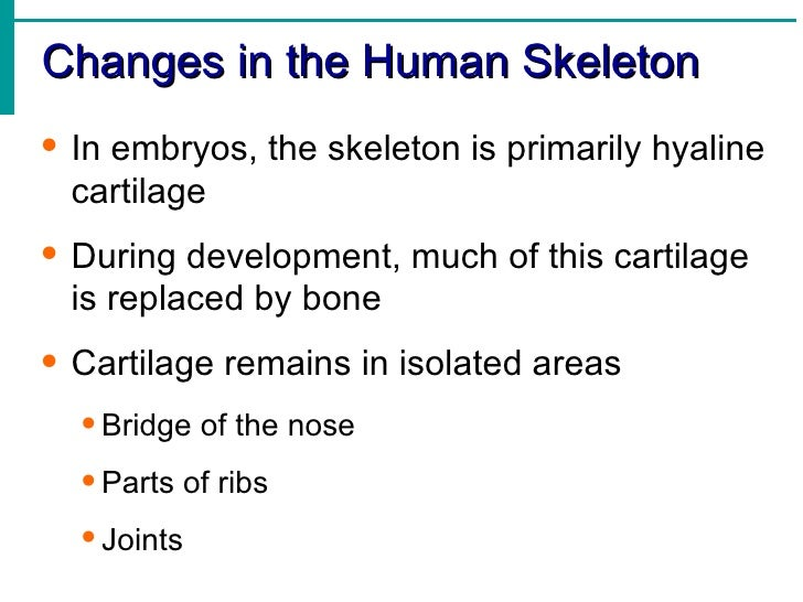 Skeletal system 17 fandeluxe Image collections