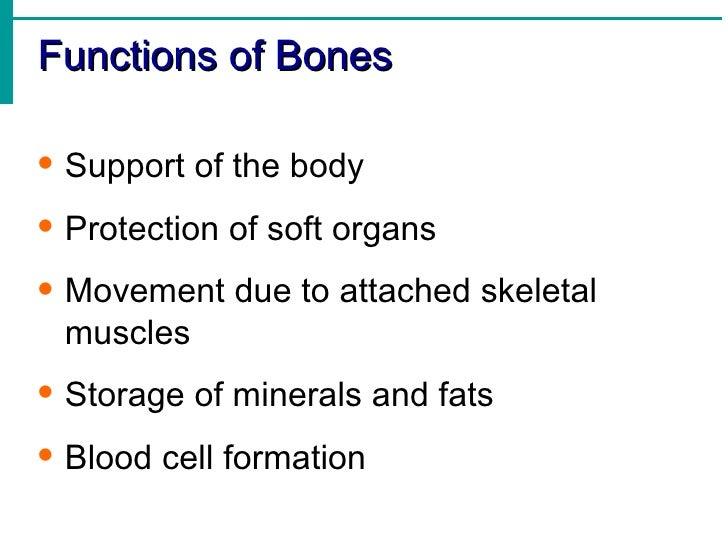 skeletal system, Skeleton