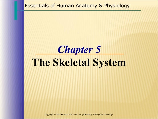 Essentials of Human Anatomy & Physiology  Chapter 5 The Skeletal System  Copyright © 2003 Pearson Education, Inc. publishi...