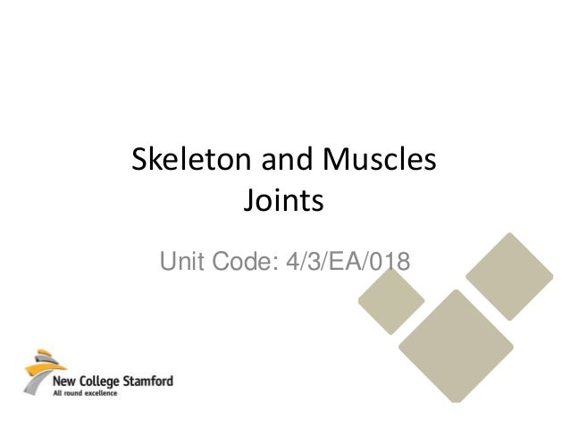 Skeletal System Joints Pearson