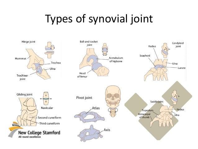 synovial joints worksheet kidz activities. Black Bedroom Furniture Sets. Home Design Ideas