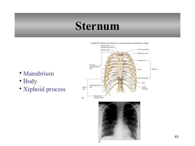 skeletal system lab Experim overview of the skeletal system overview of the skeletal system laszlo vass, edd version 42-0018-00-01 l ab report assistant this document is not meant to be a substitute for a formal laboratory report.