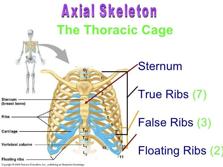 Skeletal System P2