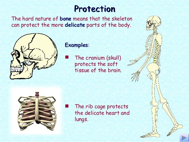 What Do the Parts of the Brain Control  LIVESTRONGCOM