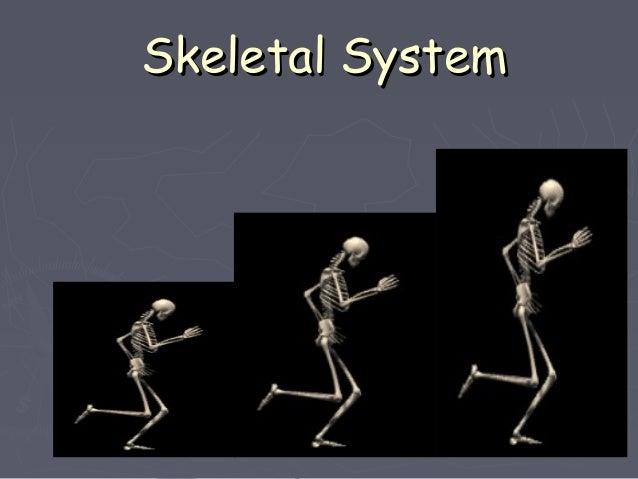 Skeletal SystemSkeletal System