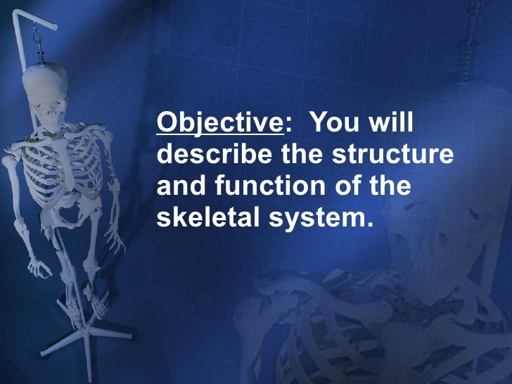 Objective :  You will describe the structure and function of the skeletal system.