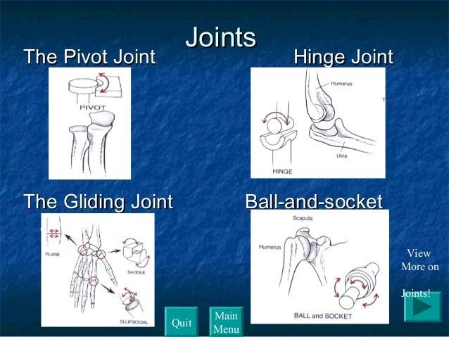 skeletal system (whms) ppt, Skeleton