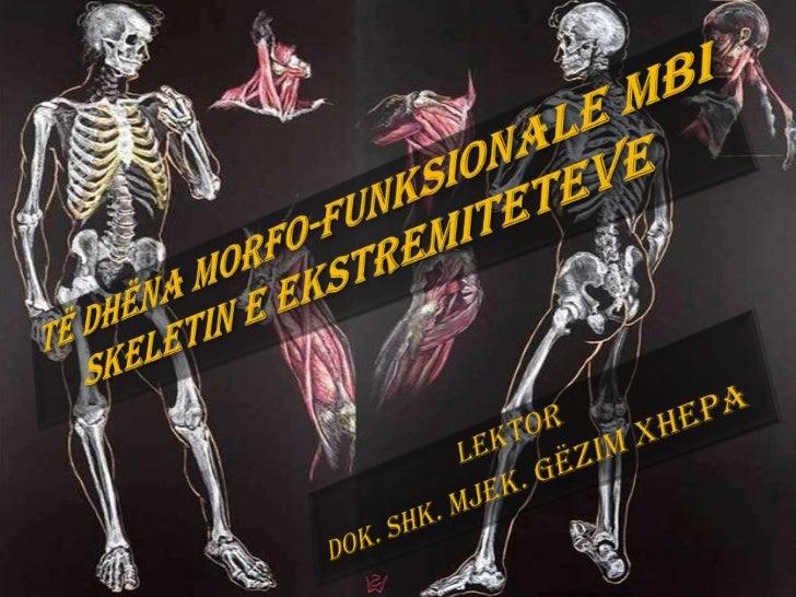 Ndarja regjionale e skeletit       apendikular              Skeleti apendikular              ndahet në:            1. Skel...