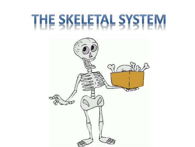 The skeleton is made up of bones