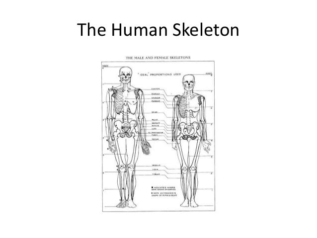 Skeleton Drawing: Under Your SKin Project