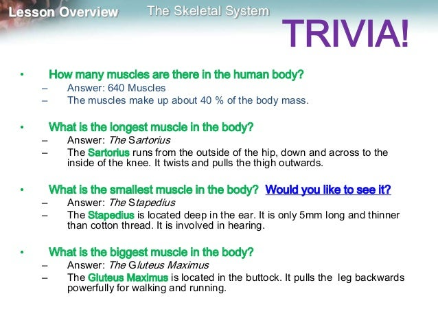how many human muscle in the body – applecool, Human body