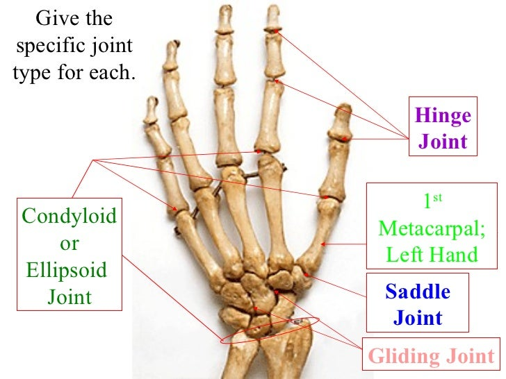Gliding Joint In Hand - More information